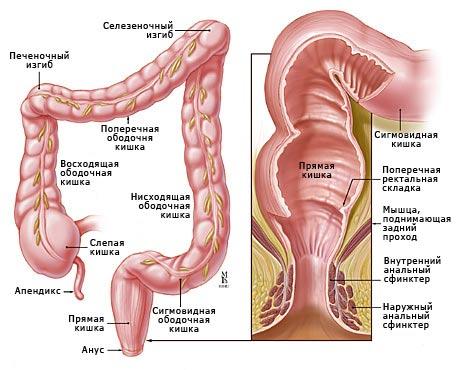 Как усилить перистальтику кишечника