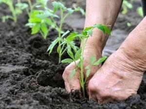 Как правильно выбрать семена и подготовить их для посева