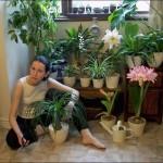 Как правильно ухаживать за комнатными цветами?