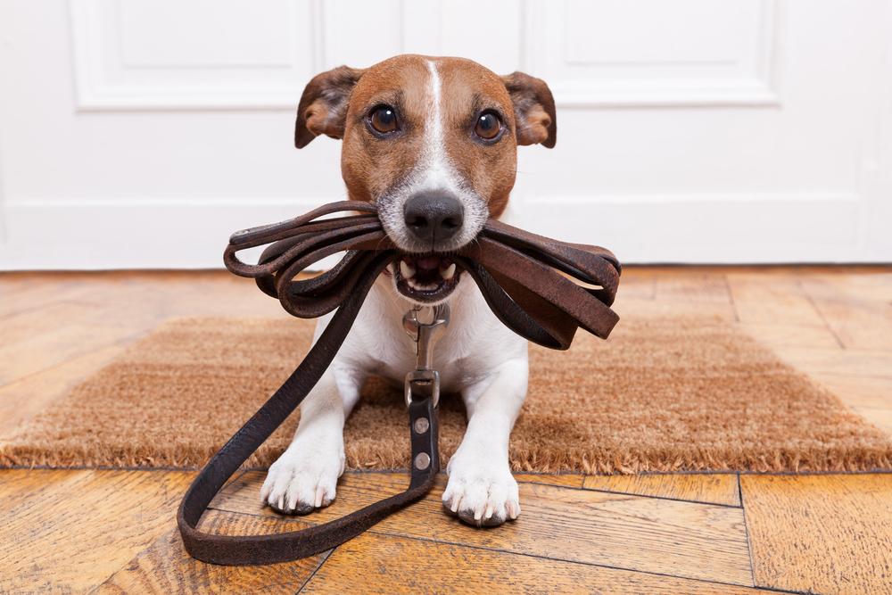 Когда нужно гулять с собакой?