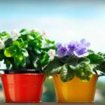 как правильно ухаживать за комнатными растениями зимой
